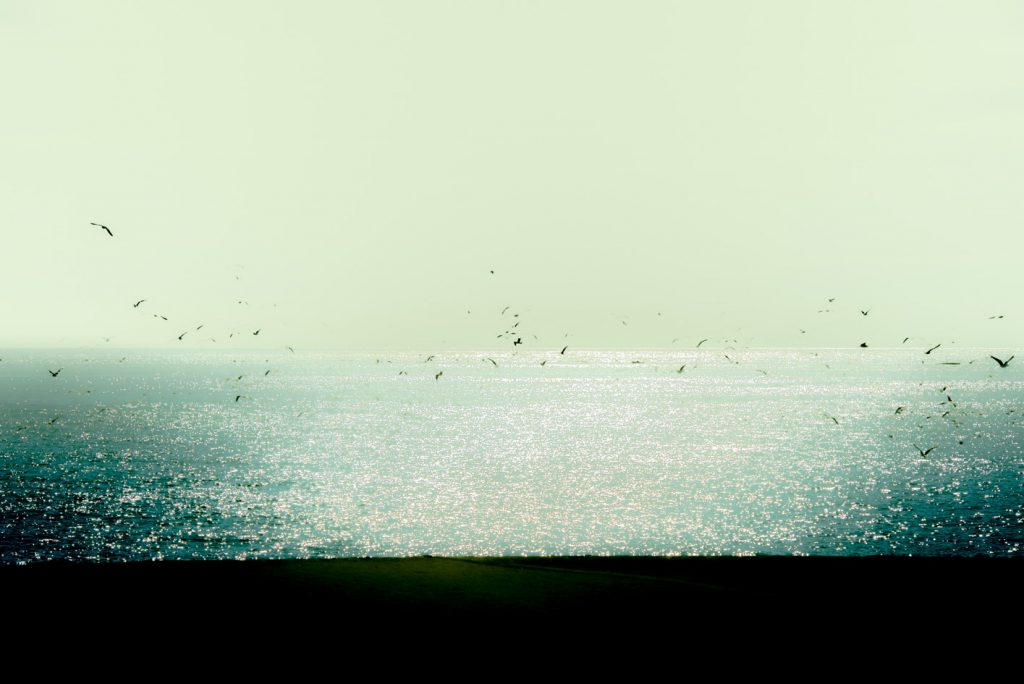 andalusia-sea-beach-seagull-greenish